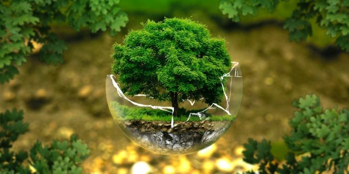 Konkursy ekologiczne i nie tylko!